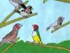 Les_oiseaux_a_bec_droit