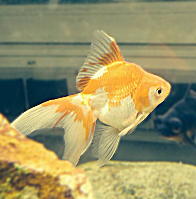 Poissons l 39 animalerie p dagogique for Animalerie poisson