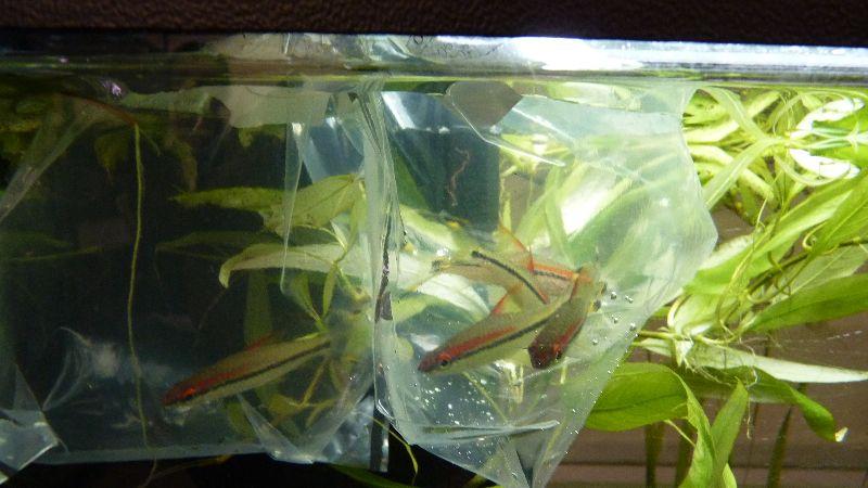 L acclimatation des poissons l 39 animalerie p dagogique for Animalerie poisson