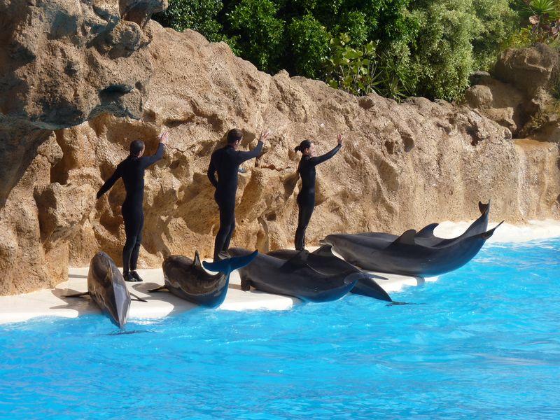 Lundi 26 mars l 39 animalerie p dagogique for Koi qui saute hors de l eau