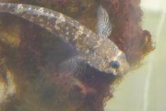 Aquarium du littoral