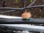 Installation de l'irrigation